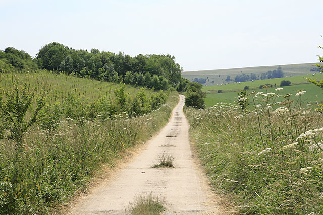 Bridleway and farm access road along the edge of Throope Hill