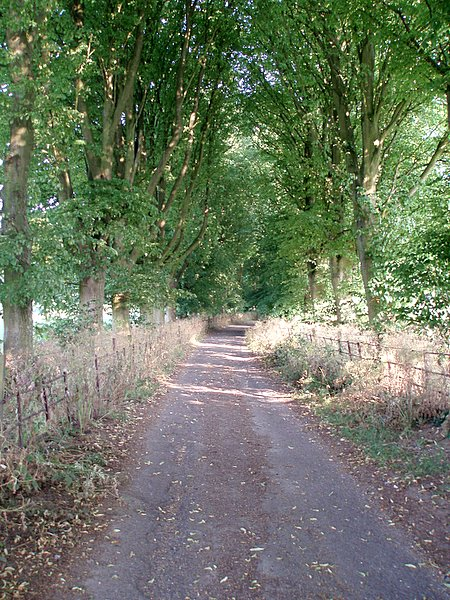 Trackway to Stinchcombe hill