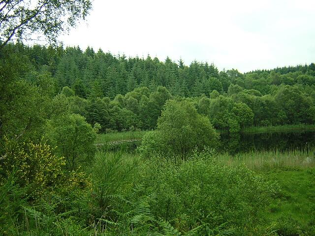 Clashmore Loch, Loch Ard Forest