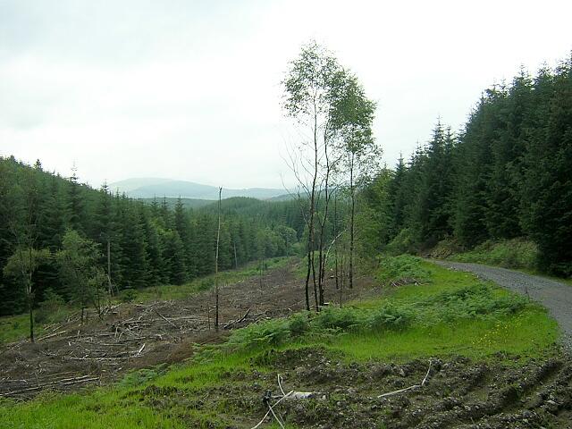 Loch Ard Forest