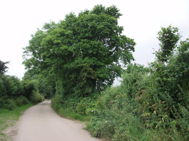 Lane near Pengelly Barton