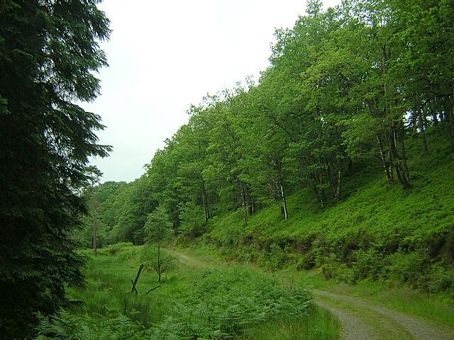 Drumore Wood, Loch Ard Forest