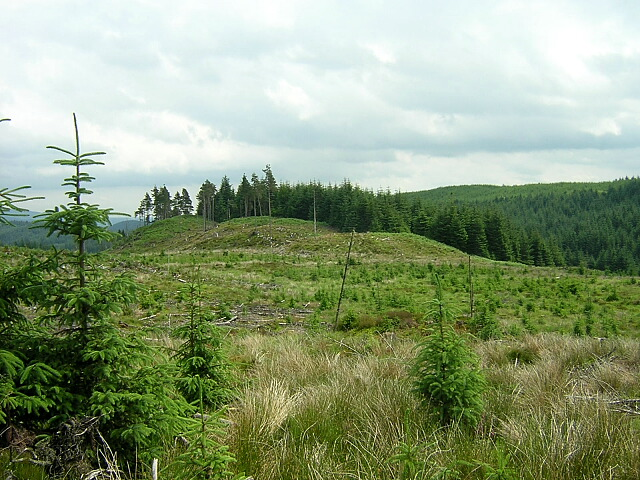 Replanted Area of Loch Ard Forest