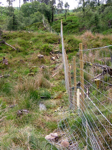 New Deer Fence in Loch Ard Forest