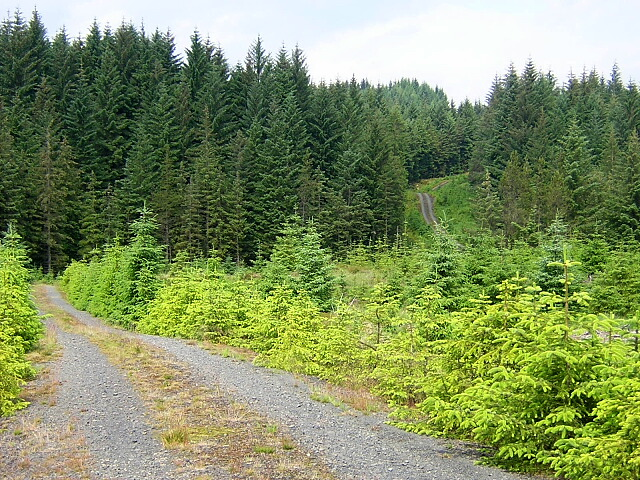 Track in Loch Ard Forest