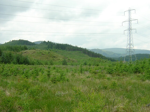 Replanted Trees in Loch Ard Forest