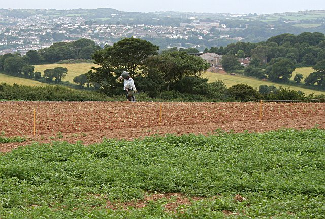 Newly Planted Crops and a Scarecrow