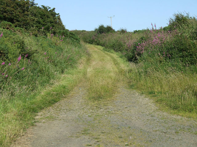 A very overgrown lane