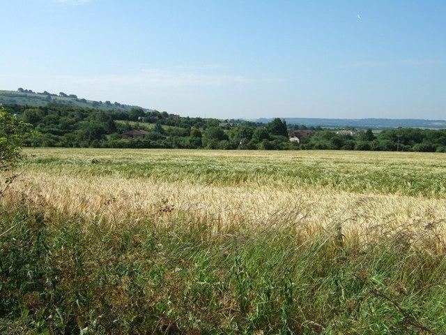 Barley Field, Wellhead Road