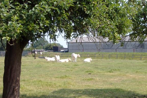 Spring Farm, Minshull Vernon