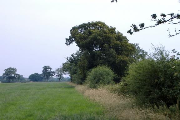 On a Warmingham footpath