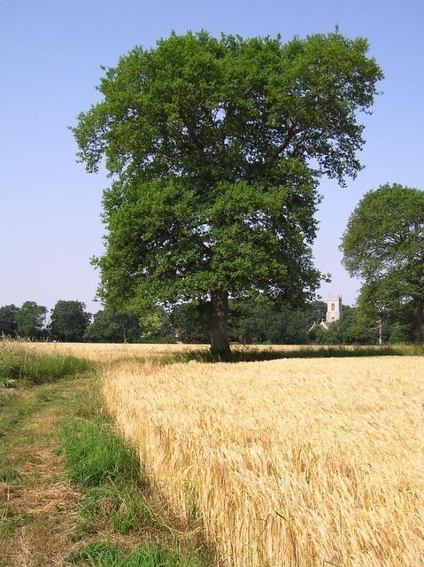 Fieldside footpath, Horning