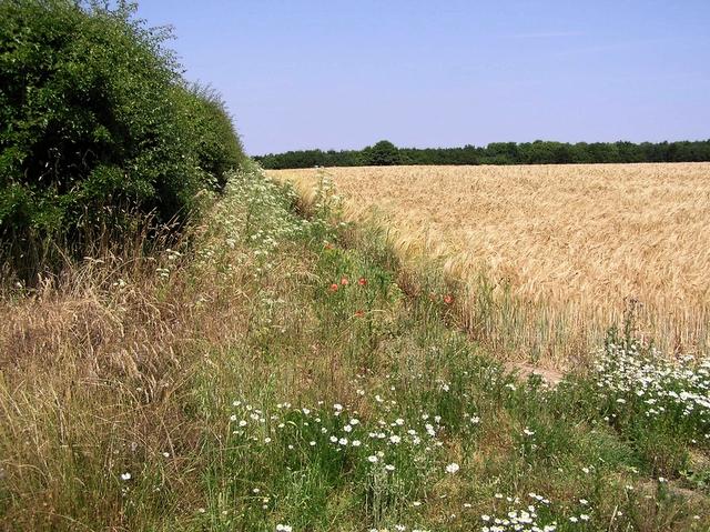 Field edge, How Hill