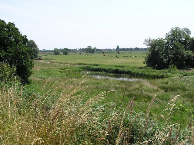 Pond, near How Hill