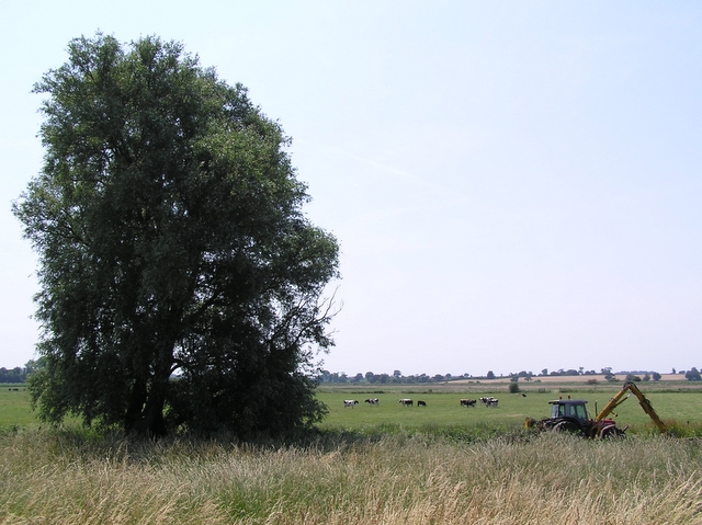 Grazing marshes, near How Hill