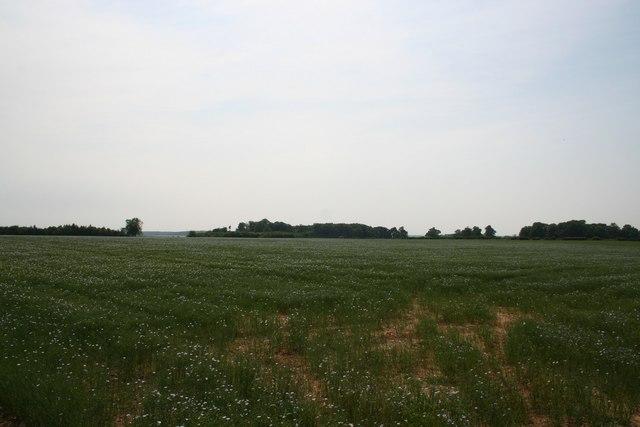Scrivelsby Farmland