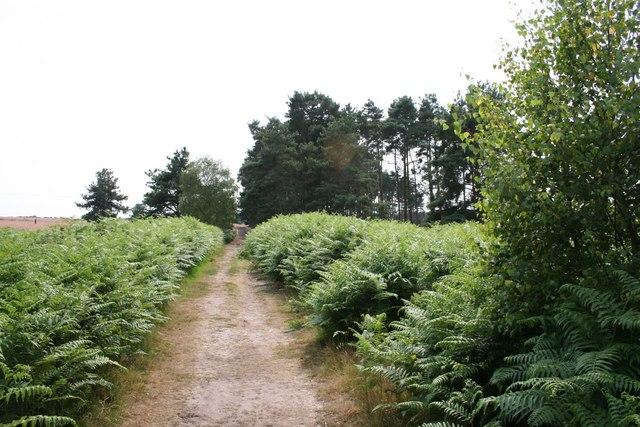 Kirkby Moor