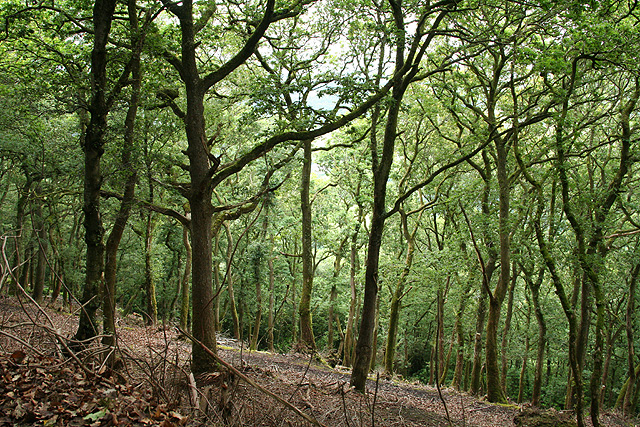Brompton Regis: Barlynch Wood