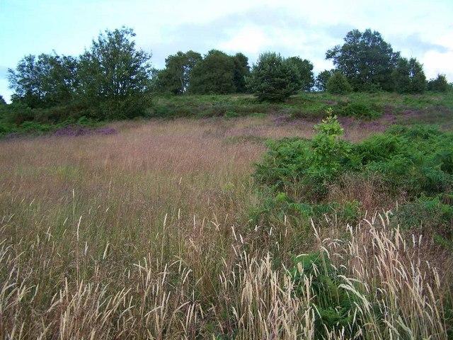 Gentleshaw Hill