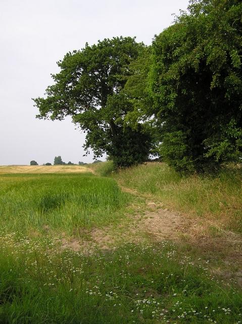 Footpath, near Catfield