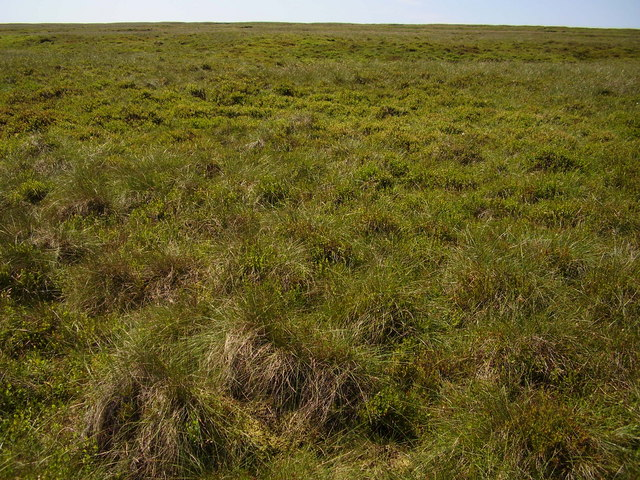 Grassy Moorland above Upper Reddale Clough