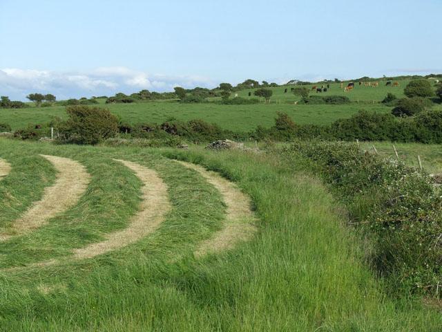 Field near to Llanfaethlu