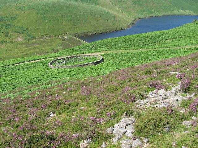 Sheepfold near Routon Burn