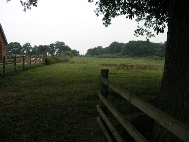Footpath and Big Tree