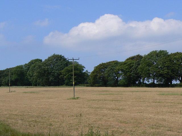 Woodland by Blairstruie