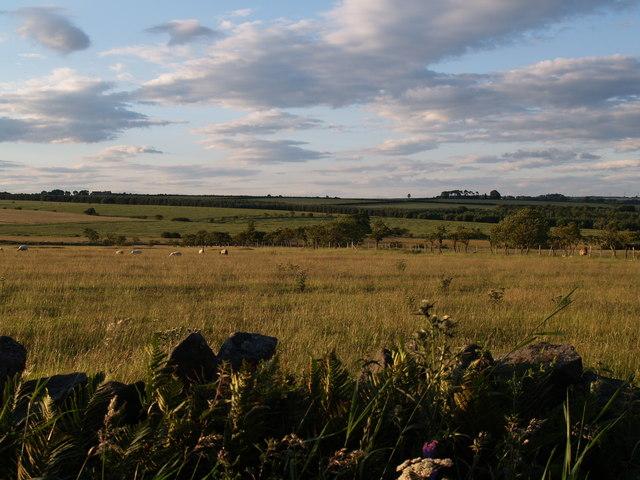 Farmland to the north of Boundary Lane