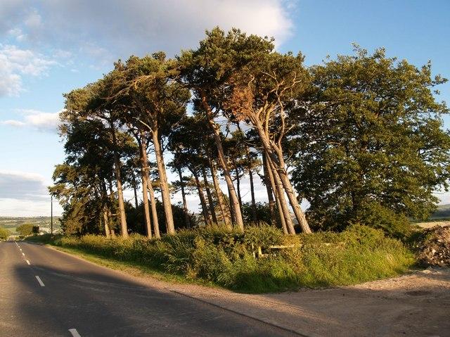 Pine Plantation and B6309 road