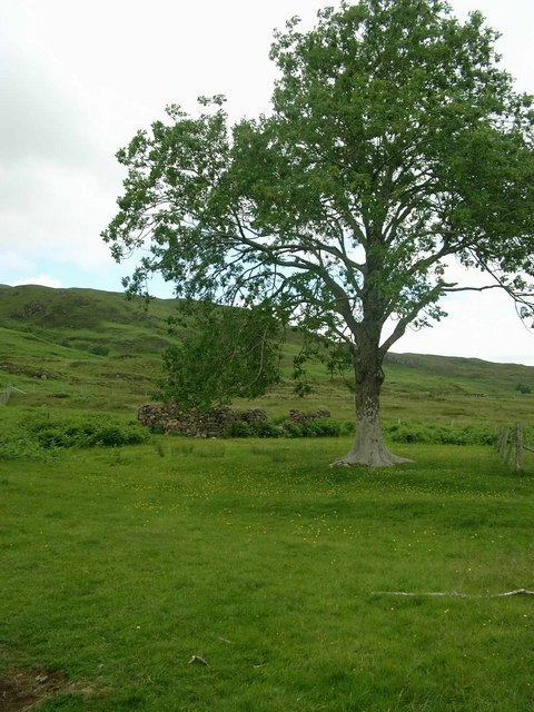 Isolated tree by the ruin at Loch a Ghlinne