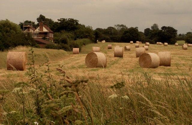 Dodd's Farm, Norton Mandeville, Essex