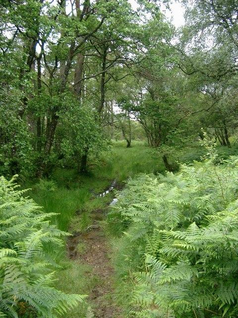The path through Coille Dalavil
