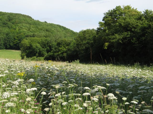 Meadow at the base of Roundway Hill
