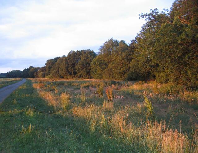 Warmington - Farnborough Lane
