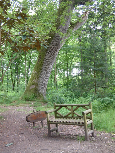 Picton Castle - Ancient Oak in the woodland
