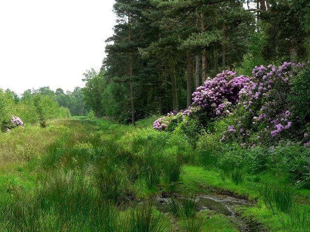 Houghton Moor