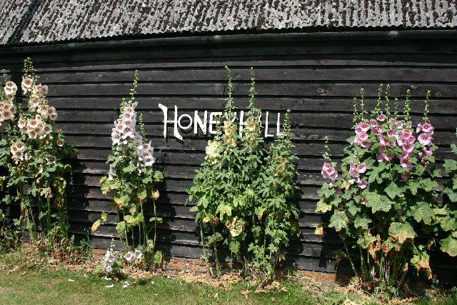 Hollyhocks at Honeyhill Farm
