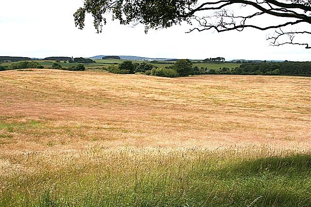 Looking towards Maverston
