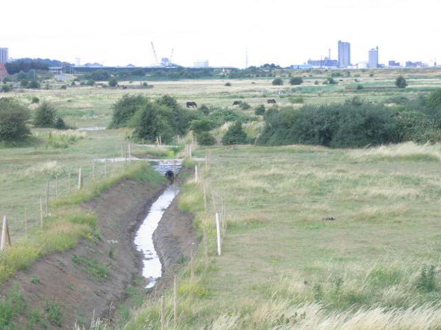 drainage ditch, Crayford Marsh
