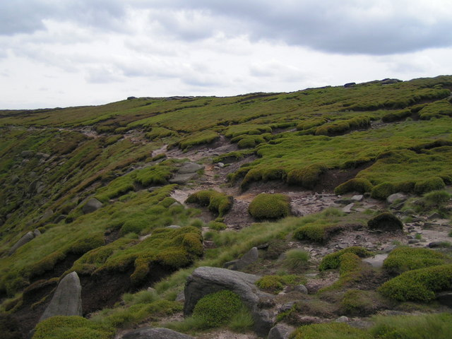 Seal Edge