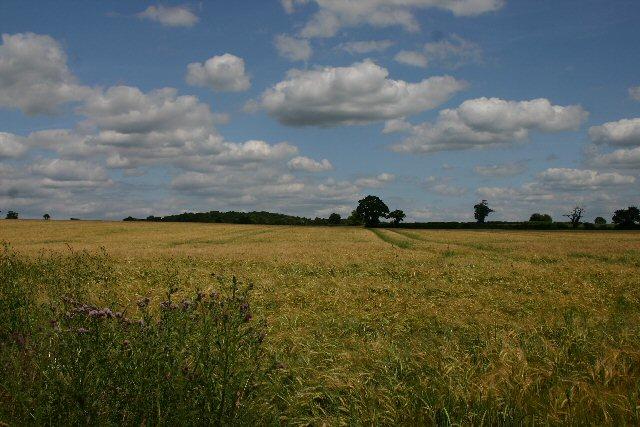 Fields between Shimpling and Alpheton