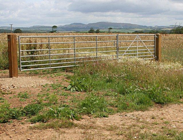 Wheatfield behind a modern gate
