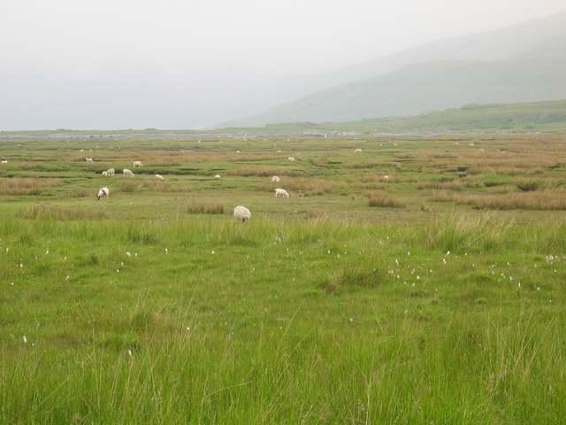 Sheep grazing near Kinloch