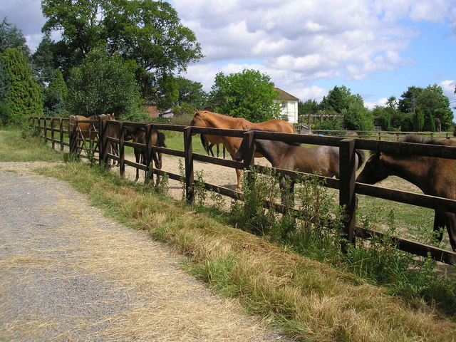 Only foals and horses, Old Lodge Farm, Surrey