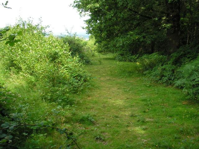 The Surrey-Kent border near Greybury Wood