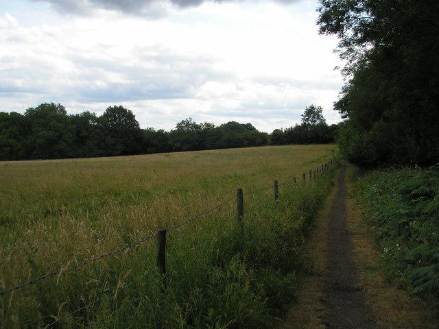 Bridleway near Minepit Wood, Kent
