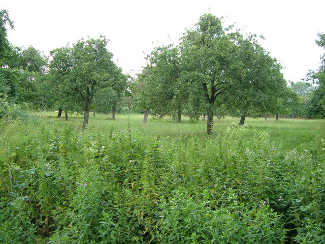 Orchard, Newport