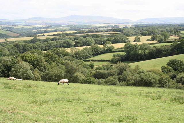 Inwardleigh: near Homing Down Cross